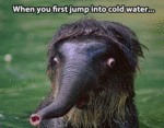 When You First Jump Into Cold Water...