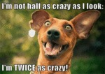 I'm Not Half As Crazy As I Look: I'm Twice As...