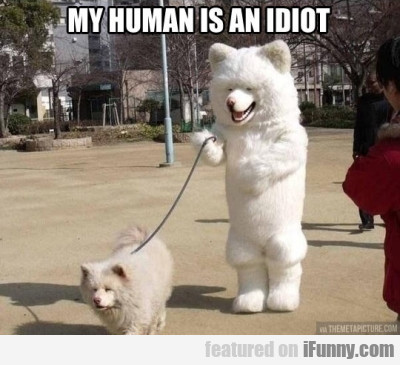 My human is an idiot