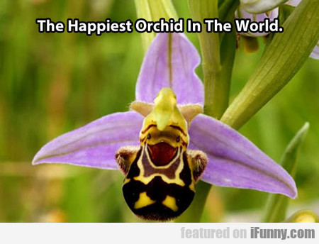 the happiest orchid in the world