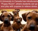 A University In Canada Has Introduced A...