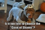 "Iz It Too Late To Choose The "" Cone Of Shame""?"