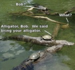 Bob? What? Alligator, Bob. We Said Bring Your...