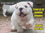 9 Out Of 10 Bulldog Puppies Totally Love You