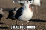 The Beach Is Open! Steal The Food!