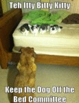 Teh Itty Bitty Kitty - Keep The Dog Off The Bed...