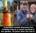 A Swedish Woman Discovers Her Wedding Ring...