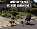 Walking The Dog. Laziness Level: Genius