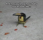 And Now You Know How A Baby Toucan Looks Like...