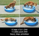 3 Bags Of Ice = $12, 1 Kiddie Pool = $10