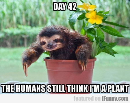 Day 42. The humans still think I am a plant.