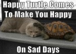 Happy Turtle Comes To Make You Happy...