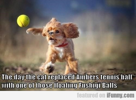 The Day The Cat Replaced Ambers Tennis Ball..