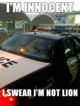 I'm Innocent, I Swear I'm Not Lion
