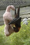 Ralphie, Like Other Rescue Bats, Like To Have A...