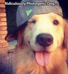 Ridiculously Photogenic Dog