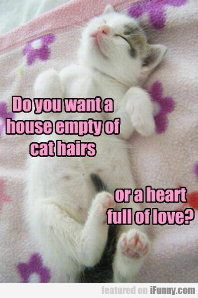 Do You Want A House Empty Of Cat Hairs...