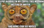 I Put Redbull In My Coffee