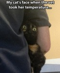 My Cat's Face When The Vet