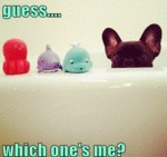 Gues.. Which One's Me?
