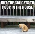 But The Cat Gets To Poop In The House