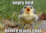 Angry Bird Before It Was Cool