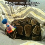 I Didn't Think Snakes Could Be Cute