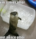I'm A River Otter Not An Ice Otter