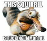 This Squirrel Is Fucking Immortal