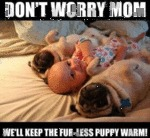 Don't Worry Mom. We'll Keep The Fur-less Puppy....