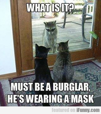 What Is It? Must Be A Burglar
