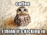 Coffee. I Think It's Kicking In