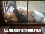 All Abord The Snooze Train