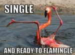 Single, And Ready To Flamingle...