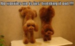 No Worries We Is Just Jus' Twerking