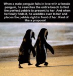 When A Male Penguin Falls In Love With A Female...
