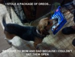 I Stole A Package Of Oreos