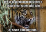 We've Just Replaced This Tiger's Usual Meat