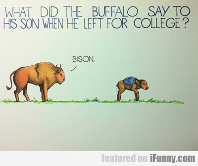 What Did The Buffalo Say To His Son When He...