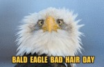 Bald Eagle Bd Hair Day
