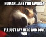 Human... Are You Awake?