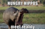 Hungry Hippos Meet Reality...
