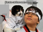 Karate Cat Has Seen Some...