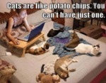 Cats Are Like Potato Chips.