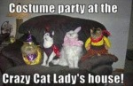 Costume Party At The Crazy Cat Lady's House