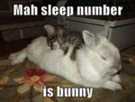Mah Sleep Number Is Bunny