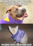 My Owner Loves Me So Much, I Get A Sweater