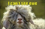 I Can't See Ewe