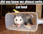 Did You Know Yer Almost Outta Cat Food