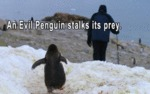 En Evil Penguin Stalks Its Prey